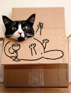 Happy hour.: Funny Cats, Pet, Crazy Cat, Cat Boxes, Funnies, Chat, Kitty, Animal, Cat Lady