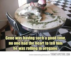 He was having such a good time…: Cats, Animals, Catnip, Crazy Cat, Funny Stuff, Funnies, Humor, Kitty, Cat Lady