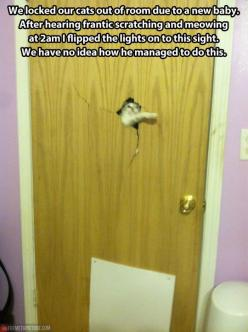 Heeere's kitty… Laughing so hard at this right now!!!!! I could totally see our dogs doing this!!!!: Cats, Animals, Funny Cat, Funny Stuff, Crazy Cat, Funnies, By