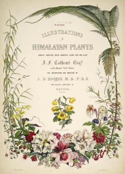 heracliteanfire:  Illustrations of Himalayan Plants chiefly selected from drawings made for the late J.F. Cathcart, Esq. of the Bengal Civil...: Chiefly Selected, Illustration, Himalayan Plants, Plants Chiefly, Late J F, Drawing, Bengal Civil