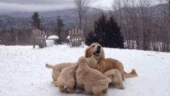 His Mom Served Burnt Toast, How His Dad Reacted, Wow! 2: Puppies, Dogs, Stuff, Happy Mama, Funny, Baby Animals, Gifs, Friend, Golden Retriever