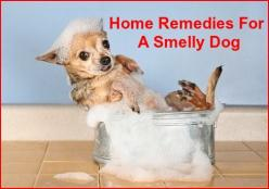 Home Remedies For Dogs - Actually our dog does not get very smelly,  but these are still good tips: Home Remedies, Fun Site, Animal Lovers, Dog Smell, Dog Grooming, Dog Health, Dog Care
