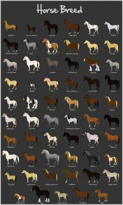 Horse Breeds chart... there are a lot more breeds but this is pretty comprehensive, with a lot of European breeds, a few Russian, American breeds, Indian, Icelandic, and Australian.: Breeds Chart, Horses, Horse Stuff, American Breeds, Horse Breeds, Europe