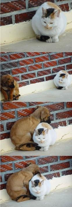 how to friend: Cats, Animals, Dogs, Friends, Sweet, Pet, My Heart, Puppy