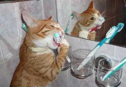 Hygiene is important!: Cats, Animals, Dental Hygiene, Pet, Funny, Teeth, Kitty
