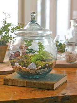 I've decided that I want a terrarium for the house... but i'll SO make my own!!: Gift, Diy'S, Terrarium Supplies, Lid Includes, Diy Terrarium, Container Gardening
