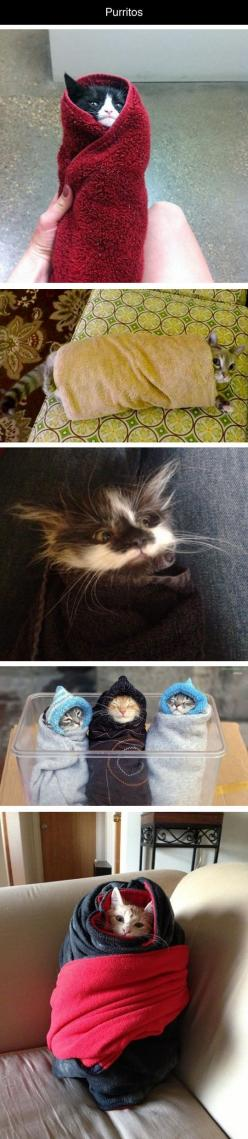 I do this to my cat all the time. And she loves it.: Aww Purritos, Kitty Cats, Kitty Burritos, Awww Kitty, Kitten Burritos, Purritos Kitten, Burrito Cats, Cat Burritos, Animal