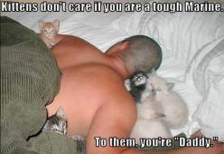 I don't care for the caption, but this picture, Too cute!: Cats, Animals, Sweet, Pet, Funny, Crazy Cat, Kittens, Kitty, Cat Lady