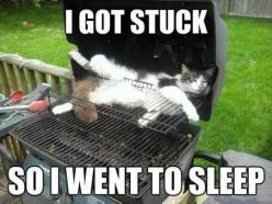 I got stuck…so I just went to sleep. Sleepy Kitty!  Hope nobody lights the Barbey Q!: Funny Animals, Funny Cats, Pet, Funny Stuff, Funnies, Humor, Kitty