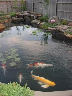 Flamingos are colour perfection flamingo feather pink for Awesome koi ponds