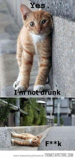 I keep laughing at this, so it deserves a pin.: Animals, Funny Cats, Drunk, Funny Stuff, Funnies, Humor, Things, Kitty