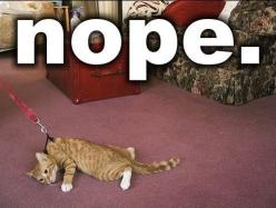 i laugh more and more everytime: Cats, Animals, Nope, Funny Stuff, Funnies, Humor, Walk