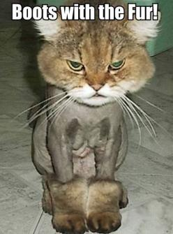 I laughed too much at this!!! @Lindsay Hahn Ashley: Cats, Ugg, Animals, Stuff, Funny, Poor Kitty, Funnies, Boots