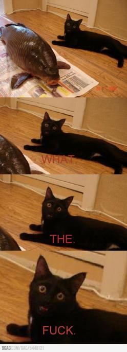 i laughed WAY too hard at this.: Cats, Big Fish, Animals, Stuff, Funny, Cat Faces