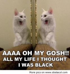 I thought I was black | Funny Pictures, Funny Images, Funny Quotes: Funny Animals, Funny Cats, Funny Picture, Funny Stuff, Funnies, Humor, Things, Kitty