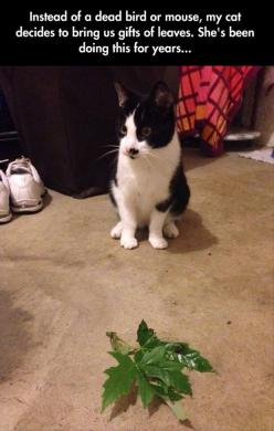 I would much rather receive thank you gifts of leaves instead of a mouse. Thank you cat. You are progressive.: Cats, Vegan Cat, Gift, Leave, Funny Cat, Funny Pictures, Funny Animal, Kitty, Cat Lady