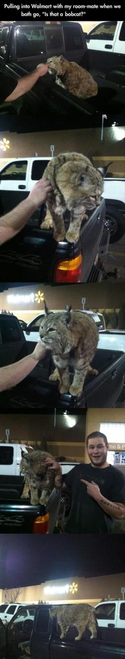 I would steal this bobcat. No joke. You think I'm joking, I'm not, I need that big cat in my life. Forever.: Random Pictures, Wild Animal, Pet Bobcat, Big Cats, At Walmart, 60 Pics, Random Walmart, Walmart Humor, People Of Walmart
