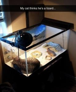It's GOT to be the heat lamp, lol.  And the poor dragon isn't getting any of it.  lol   I love cats.  : ): Animals, Funny Cats, Funnies, Cat Thinks, Bearded Dragon, Lizards