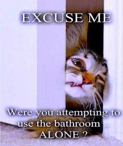 @Josie Juliette this is Hemi in cat form!!: Cats, Animals, Excuse Me, Pet, Funny Stuff, So True, Funnies, Funny Animal