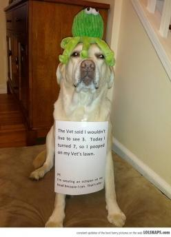 Just The Opposite Of Shaming: Winning. This put a huge smile on my face!: Animals, Dogs, Dog Shaming, Stuff, Funny Animal