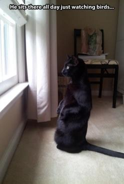 Just watching birds...: Funny Animals, Funny Cats, Black Cats, Kitty, Bird Watching, Cat Lady
