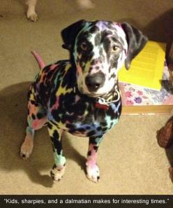 Kids, Sharpies, and dalmations. he actually looks really cute, i feel like I would let my kids do this - but maybe with washable markers lol! XD: Animals, Dogs, Funnies, Kids, Funny Animal, Dalmatians, Lisa Frank, Frank Dog