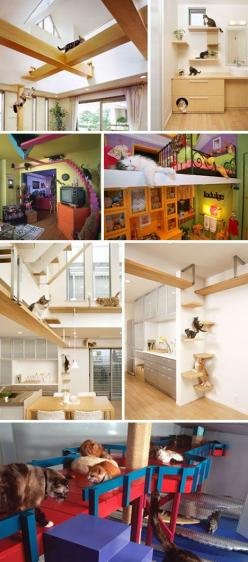 Kitty skyways. My cats could so get into these. I wonder if those brackets have been repurposed from something else, or if they need to be custom made?: Crazy Cat, Pet Home, Cat Home, Cat House, Cat Walk, Cat Room