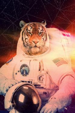 Ladies and gentlemen: Space Tiger.: Spaces, Cat, Space Tiger, Art Prints, Astronaut Tiger, Tigers, Animal