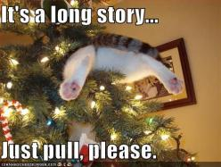Last year, we found Hershey in the Christmas tree; this year, we will probably find both cats under the tree, with the tree on top of them!: Cats, Animals, Funny Cat, Funny Stuff, Humor, Funnies, Funny Animal, Christmas Trees