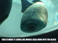 laughed way too hard at this.... He just looks so happy...: Seals, Animals, Giggle, Glasses, Funny Stuff, Funnies, Humor