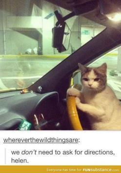 Laughed way too hard for way too long at this.: Cats, Animals, Funny Cat, Funny Stuff, Funnies, Humor, No Time, Cat Lady