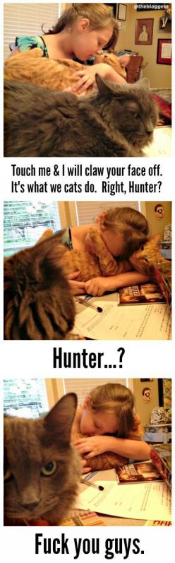 lmao...cats: Cats Humor, Hunter, Traitor, Cat Code, Things Cats, Lmao Cats, Cat Lady, Animal