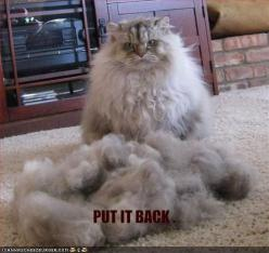 lol Every time I brush either or my pets... I would like to note at this point, I'm allergic to animal fur. My pets are slowly killing me.: Cats, Funny Animals, Funny Cat, Funny Stuff, Funnies, Humor, Things, Kitty