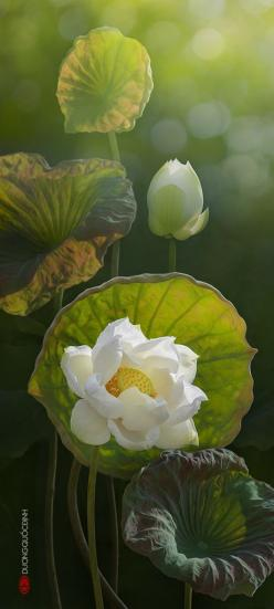Lotus...by duongquocdinh on deviantart. Not too sure if this is an art piece or an actual photo. Either way, this is beautiful and i love it!: Duong Quoc, Lotus Flowers, Art, Flower Photo, Beautiful Flowers, International Nutrition, Water Lily, Water Lili