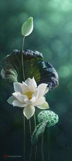 Lotus: White Lotus, White Flower, Duong Quoc, Lotus Flowers, Beautiful Flowers, International Nutrition, Flowers, Photo, Garden