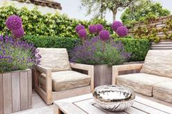 Love this idea for Lavender and Alliums incorporated into a comfortable outdoor living space!  Elegant & Cozy: Garden Ideas, Garden Design, Outdoor Living, Allium, Thought, Hadnt, Landscape, Lavender Hedge