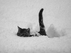<3: Cats, Animals, Winter, Funny, Snow Cat, Snow Kitty, Things, Kittens