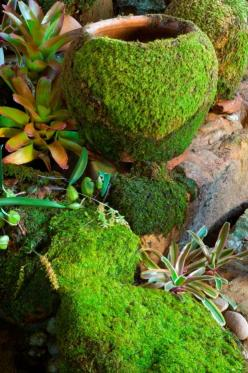 Make moss to grow on pots, rocks etc - v easy recipe!!! Can't wait to add this to the top of my old Japanese Lantern...: Garden Ideas, Can, Moss Grow, Outdoor, Parts Beer, Stone, Moss Garden