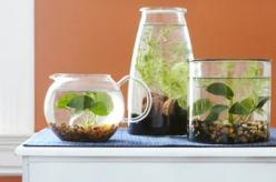 Make your own aquatic garden and add a decorative splash of greenery to your home.: Green Thumb, Water Plants, Garden Ideas, Water Gardens, Gardening Ideas, Easy Indoor, Water Terrarium, Indoor Water Garden, Indoor Plants