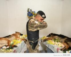 Many people remember a fallen soldier as a person in uniform. Sometimes that soldier is the four legged friend who saved your life by being a bomb-sniffing dog and finding the IED and warns you about it before it explodes. This is a sad but beautiful pict