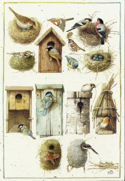Marjolein Bastin (this is NOT a free printable, but I would love to have these images to use, so putting it here so I don't forget ~TA): Marjolien Bastin, Bastin Art, Birdhouse, Album, Illustration, Marjolein Bastin, Birds, Photo