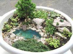 miniature fairy garden. great tips, such as, using small pea gravel for better drainage in the bottom of the pot and using a birdbath as a fairy garden. // thenester: Water Feature, Fairygardens, Miniature Gardens, Fairy House, Fairy Gardens, Mini Gardens