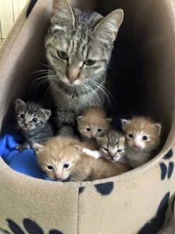 "* * MOM CAT: "" It usuallys beez de other ways round - one litter wif a runt. I hadz one litter wif four runts ands a rebel."": Adorable Animals, Precious Animals, Ahh Cats, Cats And Kittens, Baby Animals, Animals Emily Dog The, Adorable Cats, Kitty"