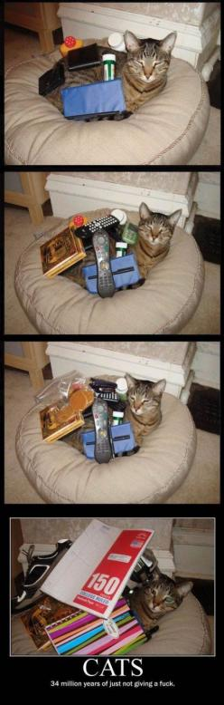 my cats steal my stuff allll the time...they run around with my socks in their mouths and i neverrrr see them again: Cats, Animals, Funny Stuff, Crazy Cat, So True, Funnies, Humor, Things