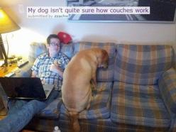 My dog isn't quite sure how couches work.: Animals, Dogs, Funny Stuff, Couches Work, Funnies, Funny Animal