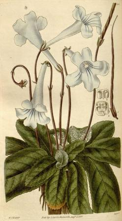 n154_w1150 by BioDivLibrary, via Flickr: Photos, Illustrations Botanicus, Natural History, Botanical Illustrations, Botanical Drawing