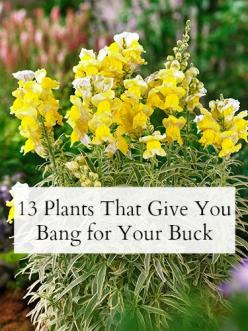 New to #gardening? Start with these easy-care (and inexpensive!) plants.: Front Yard Landscaping Idea, Garden Ideas, 13 Plants, Flower Bed Idea, Front Yard Flower Bed