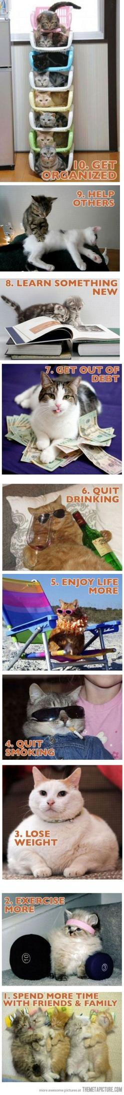 New year resolutions with cats For more New Years cats, visit https://www.facebook.com/funholidaycats: Cats, Year Resolutions, Years Resolutions, Funny Stuff, New Years, New Year'S Resolutions, Cat Lady, Animal