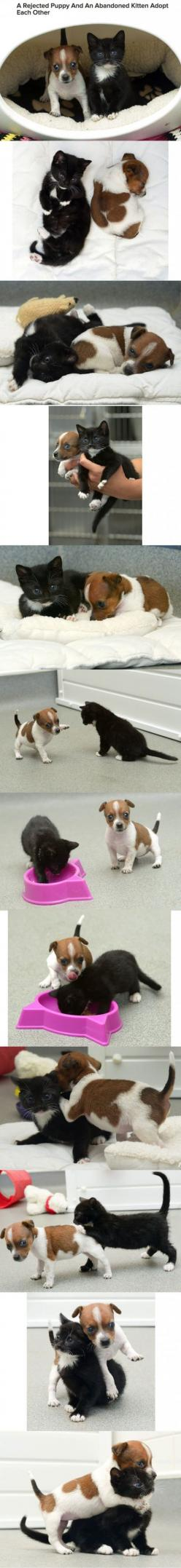 no words this is the cutest thing in the world. Animals are so adorable: Cuteness Overload, Kitten, Animals, Cat, Sweet, Best Friends, Puppy, Dog