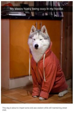 #nomakeup lol /37 Times Tumblr Told The Truth About Dogs: Doggie, Animals, Dogs, Hoodie, Siberian Husky, Pets, Funny, Siberian Huskies, Furry Friends